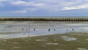 Bambuswand schützen sich stockbilder
