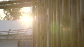 Bambuswandnahaufnahme stock video footage