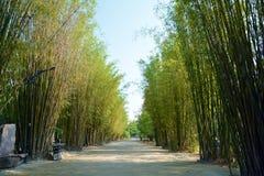 Bambusweg Stockbilder