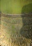 Bambuswurzel Stockbild