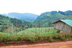 Bambuszaun Stockbild