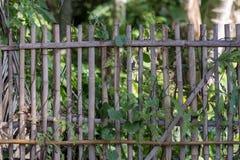 Bambuszaun im Garten stockbilder