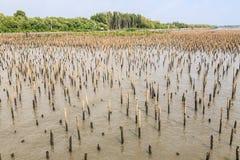 Bambuszaun schützen Sandbank vor Seewelle Lizenzfreies Stockfoto