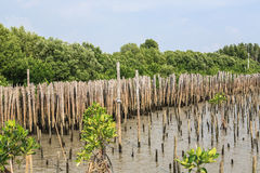 Bambuszaun schützen Sandbank vor Seewelle Stockbild