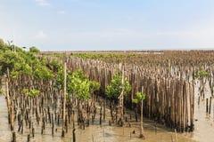 Bambuszaun schützen Sandbank vor Seewelle Stockfotografie