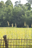 Bambuszaun und Gras Lizenzfreie Stockfotos