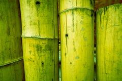 Bambuszaunhintergrundbeschaffenheit mit Seilgezeiten am Kopf und an der Unterseite Stockfotos