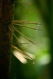 bambutaggar Fotografering för Bildbyråer
