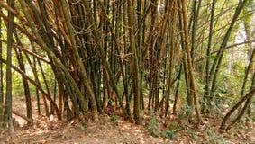 Bambuträd i tropisk skog i en sommarmiddagbild arkivfoton
