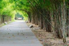 Bambuträd längs vägen Arkivfoto