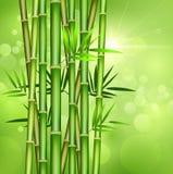 Bambuträd och gröna bakgrunder vektor illustrationer