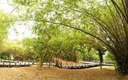 bambuträdgård Royaltyfria Foton