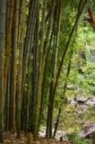 Bambuträdgård av lugn Arkivbild