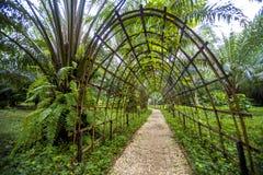 Bambutunnel och gångbana i trädgård Royaltyfria Bilder