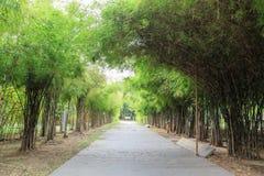 Bambuväg, botanisk trädgård Arkivfoto
