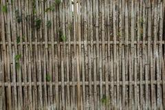 Bambuvägg, bambu på Kanchanaburi Thailand Arkivfoton