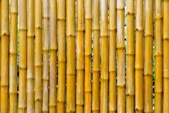 Bambuvägg, bambustaketbakgrund Royaltyfri Foto