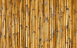 Bambuväggbakgrund Arkivfoto