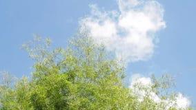 Bambuvåg stock video