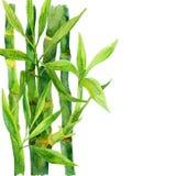 Bambuvattenfärgmålning Royaltyfria Bilder