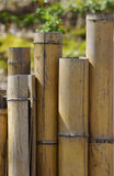 bambuvägg Royaltyfri Foto