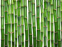bambuwhite Royaltyfria Bilder
