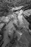 Bamni vattenfall - svartvit bild royaltyfri fotografi