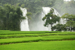 Ban Gioc Waterfall with ducks in a rice field Royalty Free Stock Photography