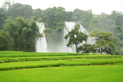 Ban Gioc Waterfall and rice fields in Vietnam Royalty Free Stock Photography