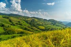 Ban Pa Bong Piang rice terrace Royalty Free Stock Photo