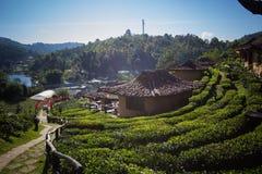 Earthen buildings and U-Long tea plantations at Ban Rak Thai Village,near Thai-Myanmar border,Mae Hong Son province,Northern Thail. Ban Rak Thai VillageCommunity royalty free stock image