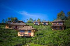 Earthen buildings and U-Long tea plantations at Ban Rak Thai Village,near Thai-Myanmar border,Mae Hong Son province,Northern Thail. Ban Rak Thai VillageCommunity stock photo