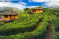 Ban Ruk Thai house on hill nature scene background Stock Photo
