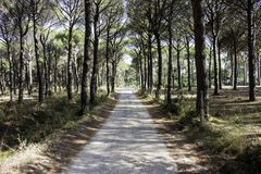Bana över en medelhavs- skog royaltyfri foto