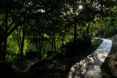 Bana bland grönskan och solljuset Arkivfoto