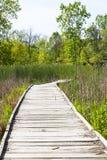Bana för trä för planka för NPV-naturmitt arkivbilder