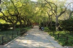 Bana i Centrals Park drivhus arkivbild