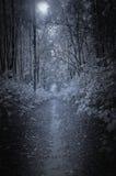 Bana i den djupa skogen Royaltyfria Foton