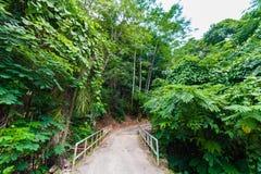 Bana i den fråna Seychellerna skogen port seychelles för kustlinjeömahe Djungelväg arkivbild