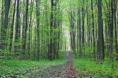 Bana i den gröna skogen Arkivfoton