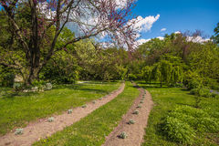 Bana i den hemliga trädgården av Ninfa Royaltyfria Bilder