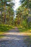 Bana i den polska skogen Arkivbild