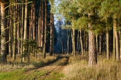 Bana in i den soliga skogen Fotografering för Bildbyråer