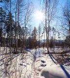 Bana i den soliga vintersolen för skog royaltyfri foto