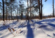 Bana i den soliga vintersolen för skog arkivbilder