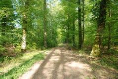 Bana i den svarta skogen, Tyskland arkivbild