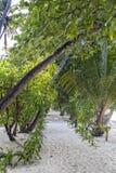 Bana i den tropiska vegatationen, Maldiverna royaltyfria foton