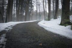 Bana i dimmig skog Arkivfoto
