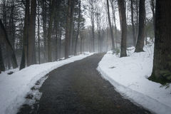 Bana i dimmig skog Royaltyfria Foton