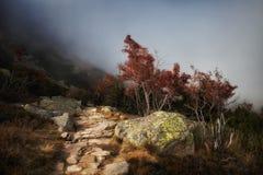 Bana i dimmiga berg Fotografering för Bildbyråer